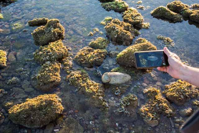 En este post visitamos los corrales de pesca de Rota