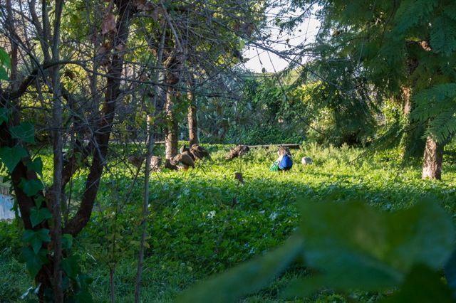 Parque-La-Toya-Trebujena
