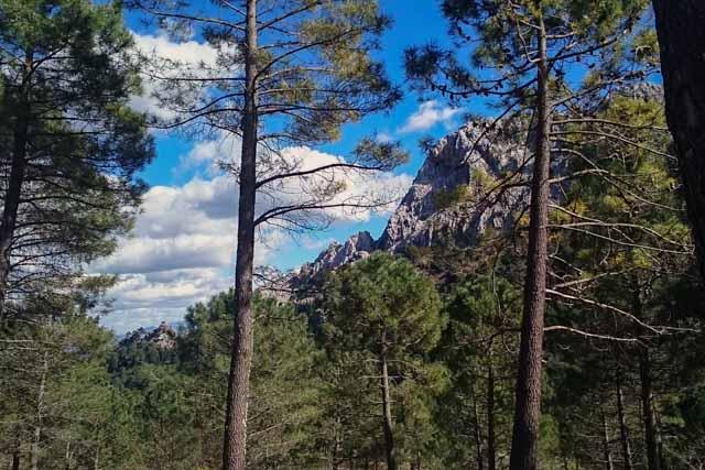 Walk through the Spanish fir forest.